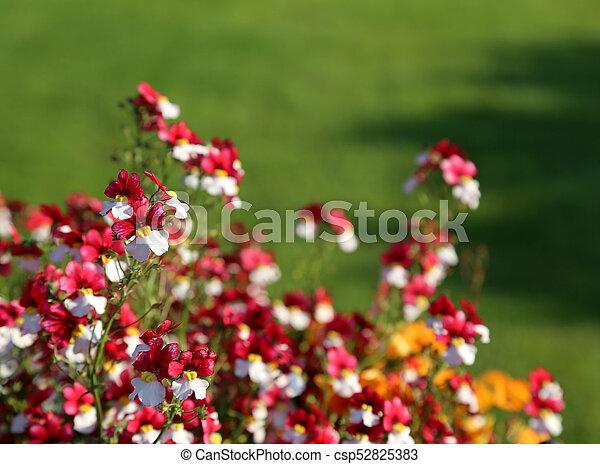 Schöne , blütenblätter , klein, weisse blumen, rotes .