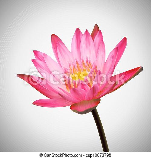 Schöne , blume, wasser, bloom., hintergrund, lilie.