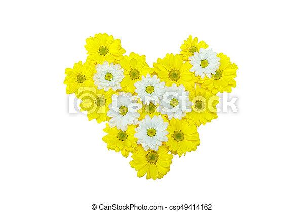 Schöne , herz, oberseite, freigestellt, gelber , crysantheme, form ...
