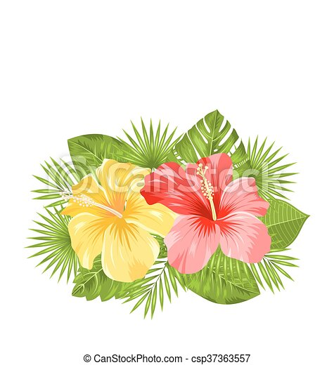 Schöne , hibiskus, bunte, blüte, blätter, tropische blumen ...