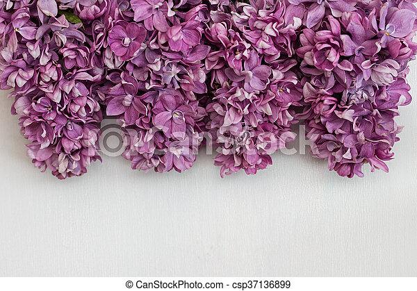 Schöne , hintergrund., weisse blumen, lila. Schöne , lilac ...