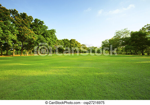 Schönes Morgenlicht im öffentlichen Park mit grünem Grasfeld und - csp27216975