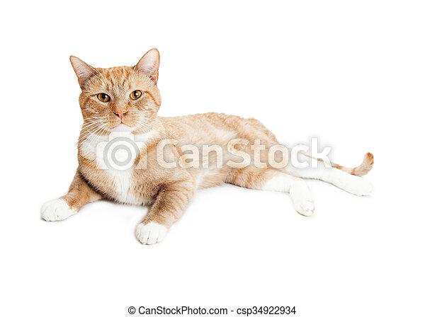 Schöne , liegende , katz, orange, aufmerksam, seite. Liegende , katz ...
