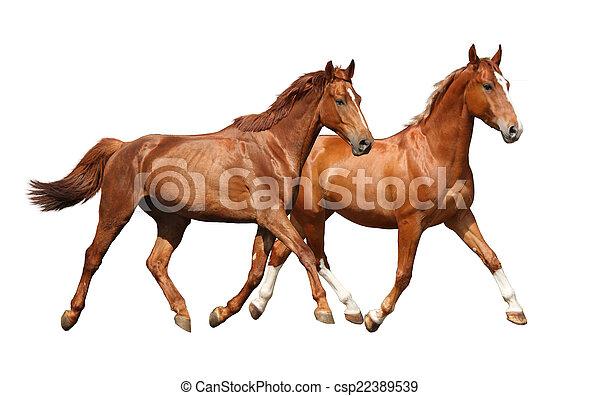 bibi und tina mit pferden malvorlagen