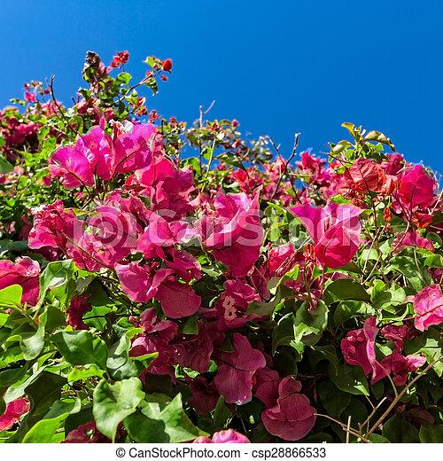 sch ne rosa blauer himmel busch hintergrund blumen sch ne rosa blauer himmel busch. Black Bedroom Furniture Sets. Home Design Ideas