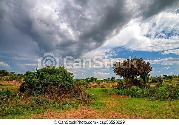 schöne , savanne, afrikas - csp56528229