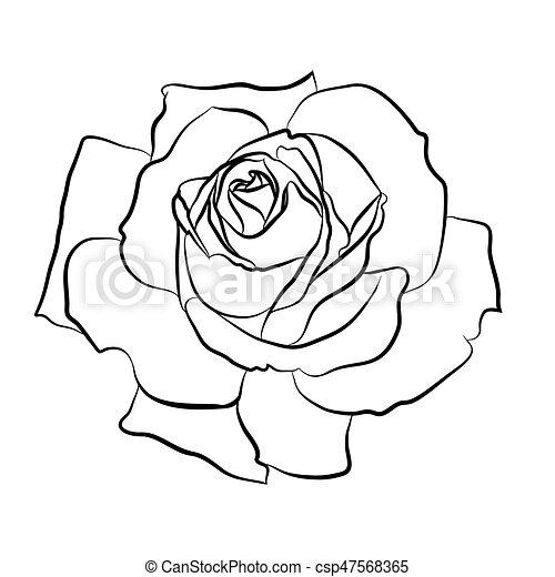 sch ne skizze blume silhouette contur freigestellt rose hand hintergrund schwarz. Black Bedroom Furniture Sets. Home Design Ideas