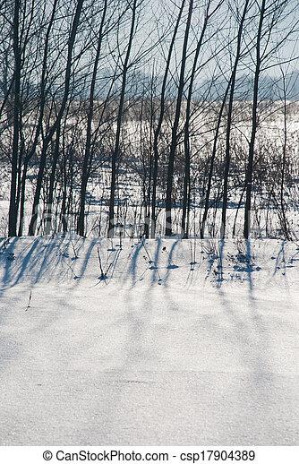 schaduwen, sneeuw, bomen - csp17904389
