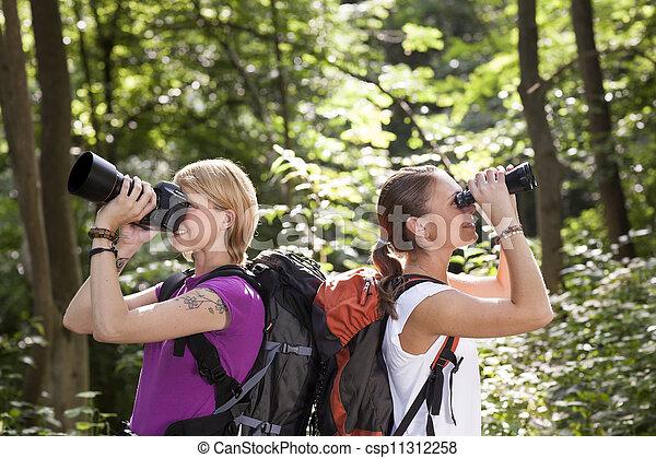 schauen, wandern, zwei, fernglas, wald, frauen - csp11312258
