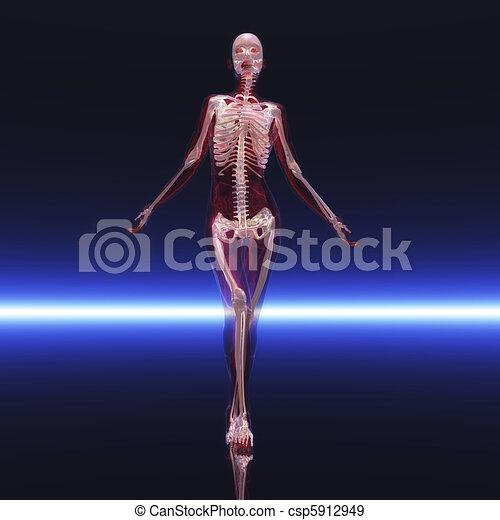 scheletro - csp5912949