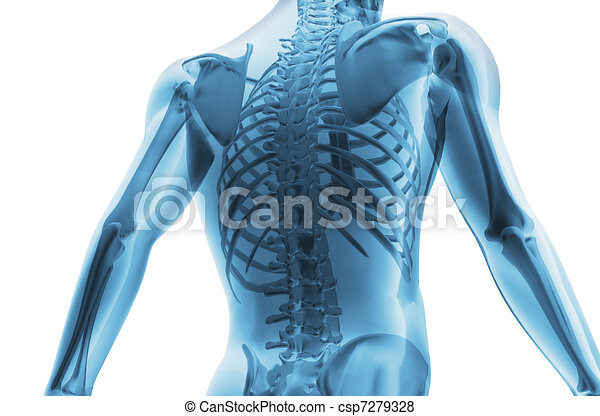 scheletro, uomo - csp7279328