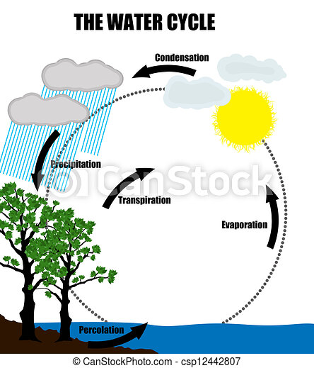 Schematic representation of the water cycle in nature - csp12442807