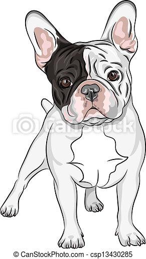 schets, bulldog, ras, huiselijke hond, franse , vector - csp13430285