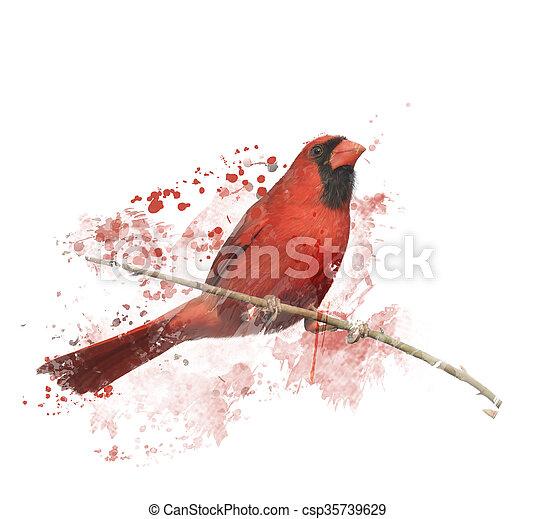 schilderij, mannelijke , kardinaal, noordelijk, digitale  - csp35739629