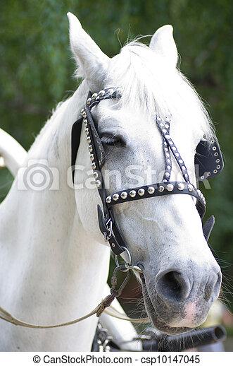 Weißes Pferd - csp10147045