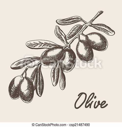 schizzo, albero, stile, illustrazione, mano, ramo, oliva, disegnato - csp21487490
