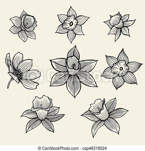 schizzo, flowers. - csp46318524