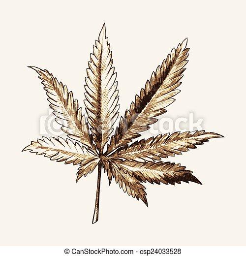 schizzo, foglia, marijuana - csp24033528