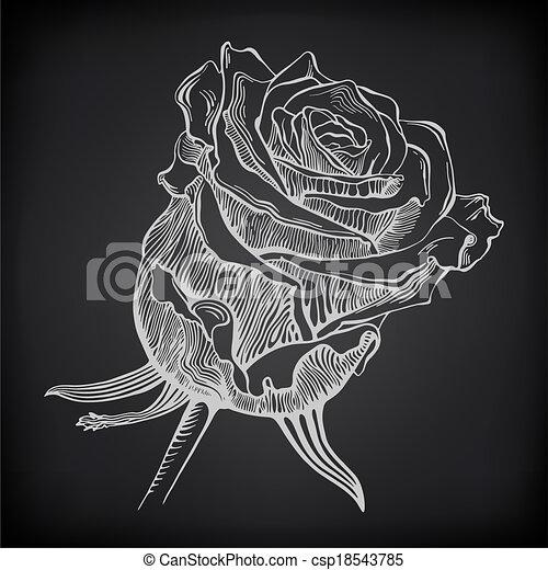 Schizzo Rosa Sfondo Nero Digitale Bianco Disegno