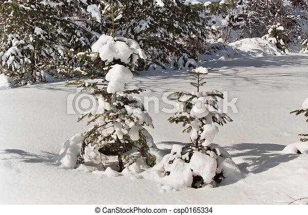 schnee, bäume - csp0165334