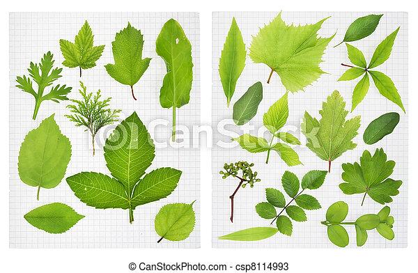 Herbarium Blätter herbarium green leaves of the european plants on stock