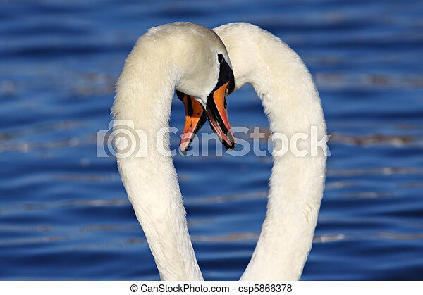 Farbige Mit Großem Weißen Schwanz