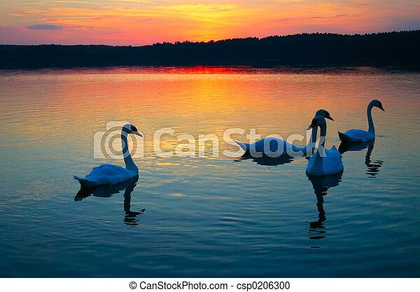 Swan-Familie - csp0206300