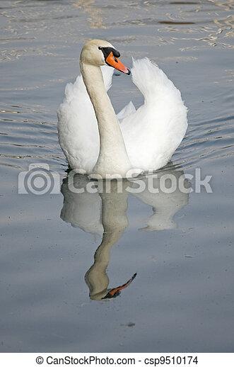 Swan - csp9510174