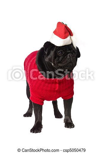 schwarz mops kleiden weihnachten mops freigestellt. Black Bedroom Furniture Sets. Home Design Ideas