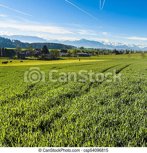 schweiz, ackerbau, tier - csp54096815