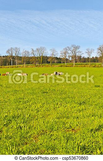 Tierhaltung in der Schweiz - csp53670860