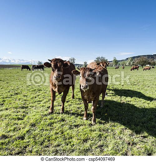 Tierhaltung in der Schweiz - csp54097469