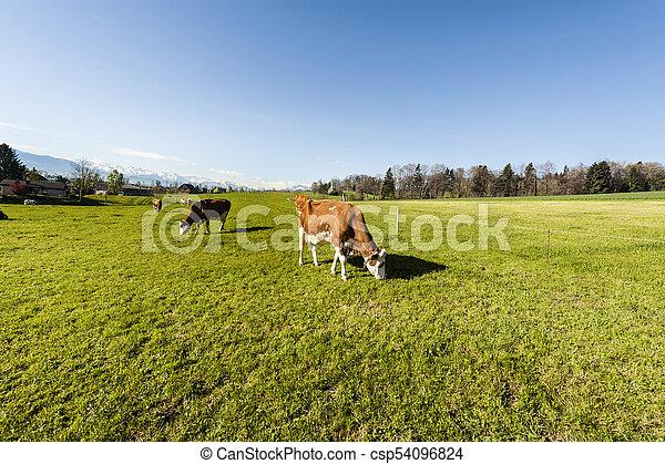 Tierhaltung in der Schweiz - csp54096824