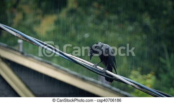Schwer , draht, regenstürm, vogel. Drähte, telefon, regen, häusser ...
