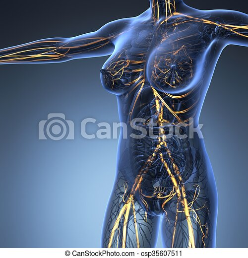 Science anatomy of human body in x-ray with glow blood vessels.
