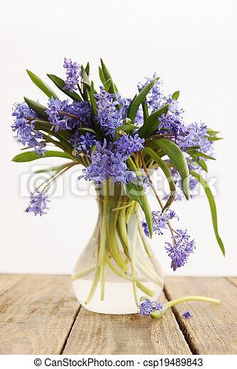 scilla in vase - csp19489843