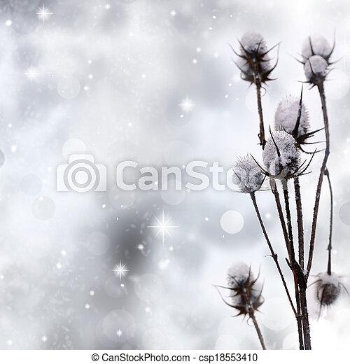 scintilla, pianta, neve, fondo, coperto - csp18553410