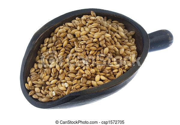 scoop of hulled barley grain - csp1572705