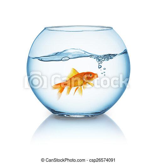 screaming goldfish in a bowl - csp26574091