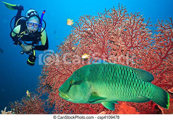 Scuba diver - csp4109478