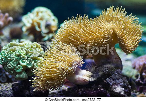 Sea Anemones Predatory Animals