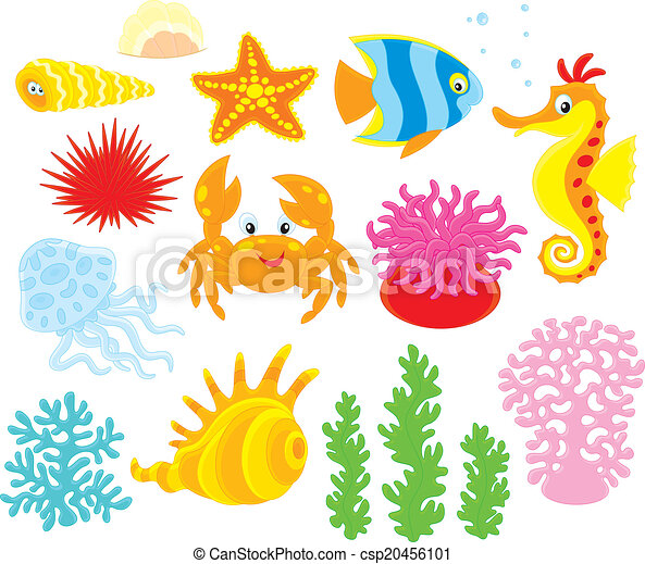 Sea animals - csp20456101