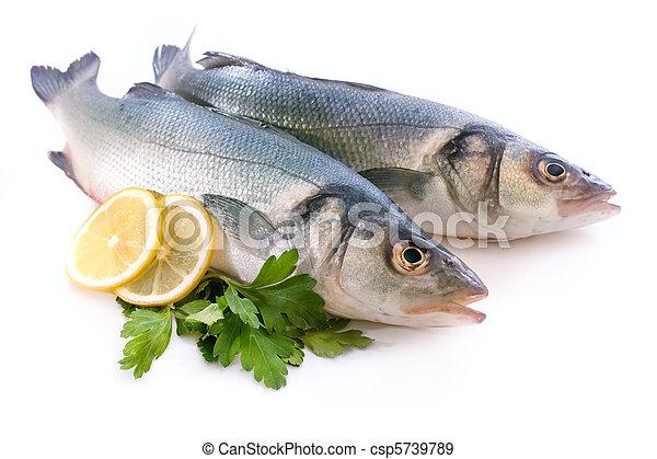 Sea-bass, Dicentrarchus labrax - csp5739789