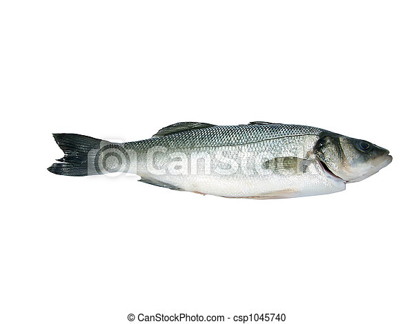 Sea-Bass Isolated(Dicentr - csp1045740