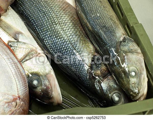 Sea bass on fish market - csp5262753