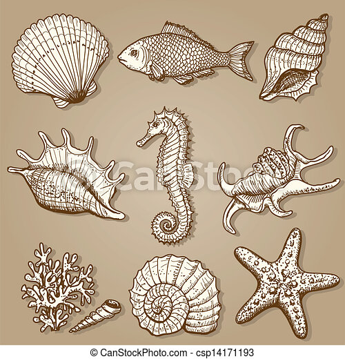 Sea collection. Original hand drawn illustration - csp14171193