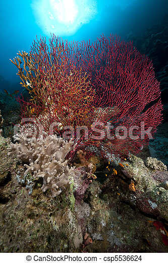 Sea fan coral and fish in the red sea publicscrutiny Images