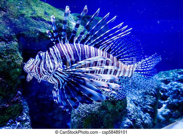 Sea Fish - Striped Zebra Spider - csp58489101
