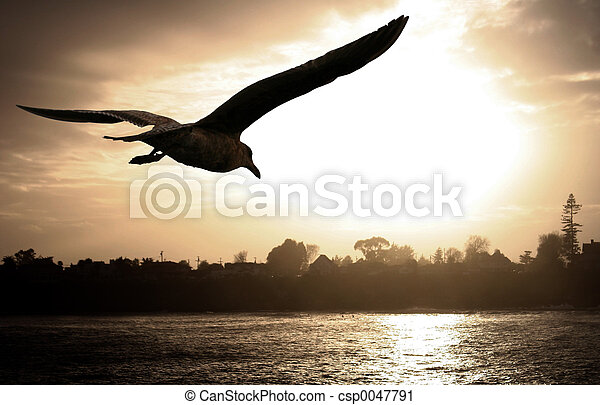 Sea gull at sunset - csp0047791