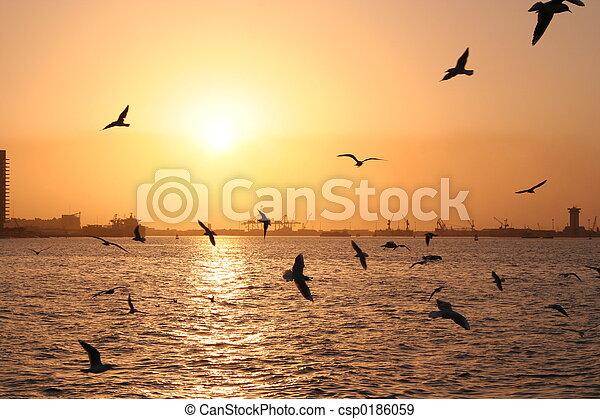 sea gull in gulf - csp0186059